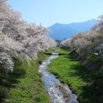 【黒沢川両岸の桜並木】静かに安曇野に春を告げる黒沢川の桜並木