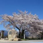 【早春賦の碑】満開の桜と北アルプスと青空がよく似合う早春賦の碑