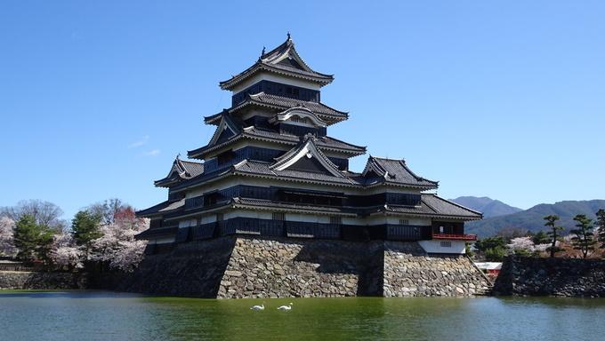 松本城とコハクチョウ