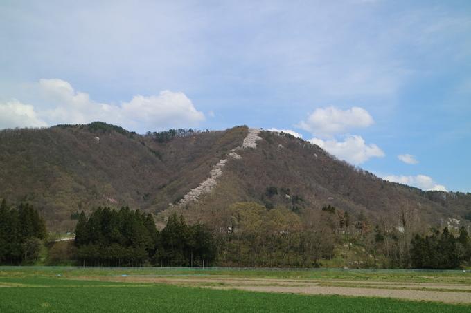光城山の昇り竜
