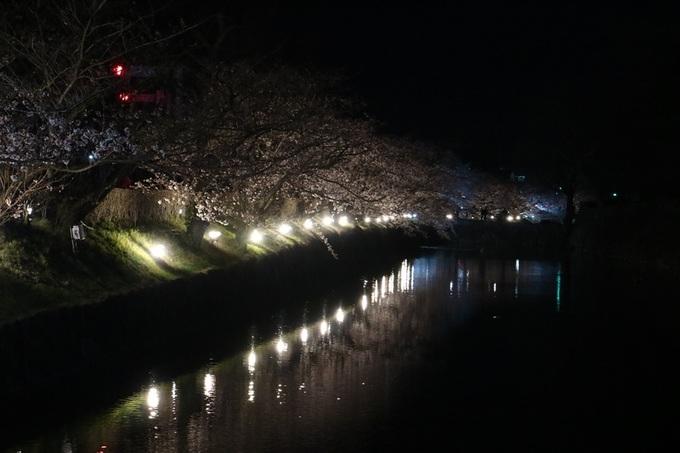 松本城夜桜会