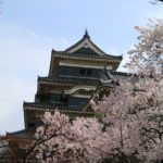 【国宝松本城】多くの観光客で賑わう松本城の桜はまだ七分咲き!