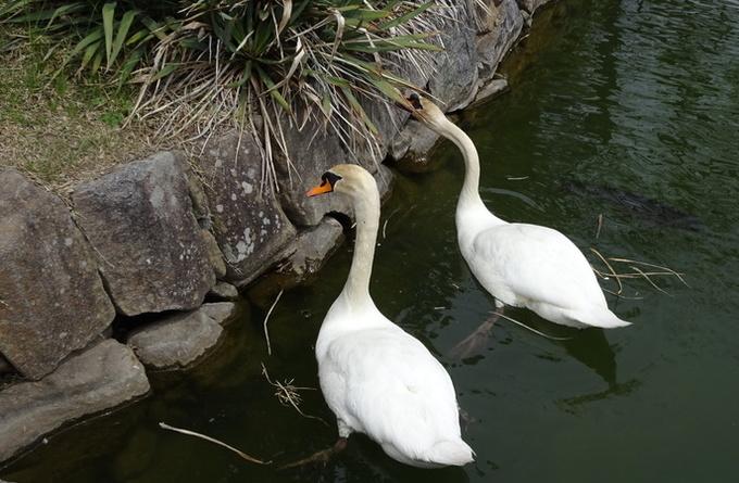 女鳥羽川に泳ぐ鯉のぼり