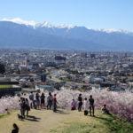 【弘法山公園】山全体が桜の木で埋め尽くされている弘法山古墳