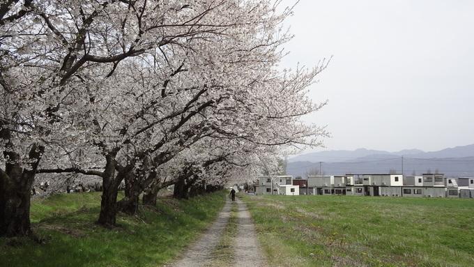 黒沢川両岸の桜
