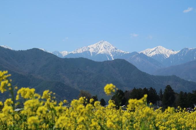 菜の花畑と常念岳