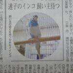 迷子のインコ、飼い主と再会-市民タイムズ情報