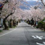 城山公園とその途中に広がる桜のトンネル
