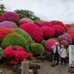 鶴峯公園つつじ祭り