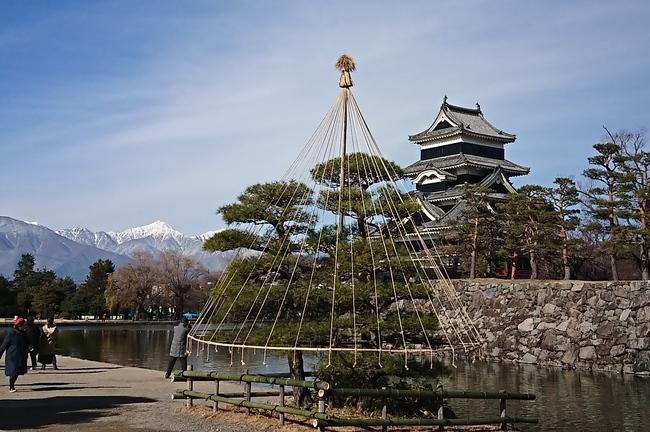松本城の木々の冬囲い