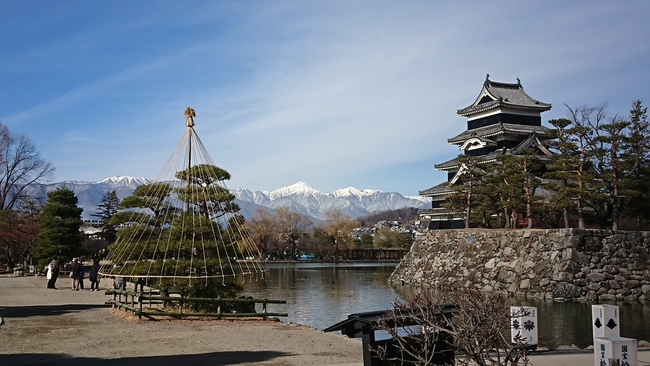 北アルプスと松本城と冬囲い