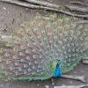 アルプス公園の動物園は無料