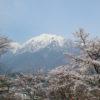 大町山岳博物館から見渡す残雪の北アルプスと桜
