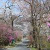 天白公園のミツバツツジの群生地